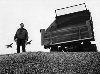 Helmut Wildt in SCHWARZER KIES (BRD 1961, Regie: Helmut Käutner) Quelle: Deutsche Kinemathek