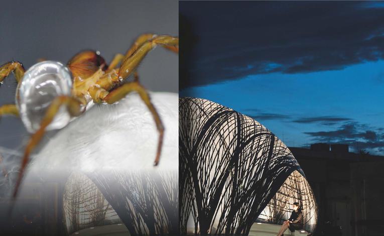 baubionik – biologie beflügelt architektur