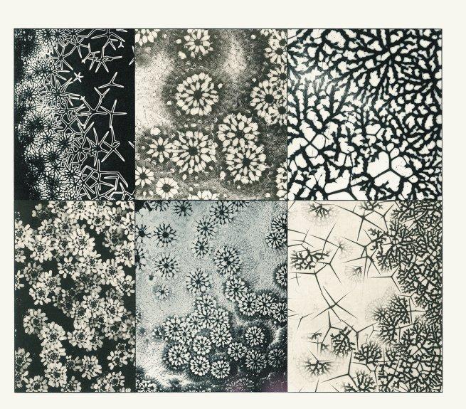 Martin Gerlach Mikroskopische Aufnahmen, Aus: Formenwelt aus dem Naturreiche (Die Quelle, Bd. V), Wien: Gerlach u. Wiedling (1902-1904)
